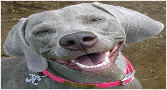 Do Animals Smile?